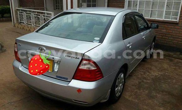Buy Toyota Corolla Silver Car in Limete in Malawi